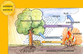 Holz ist ein regenerativer Brennstoff